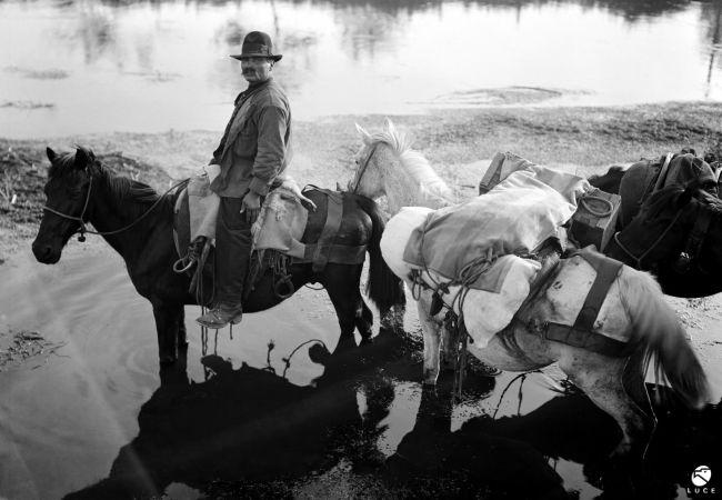 Buttero a cavallo - Agro Pontino - 1931