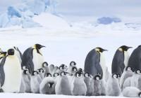 la-marcia-dei-pinguini-2-il-richiamo-01