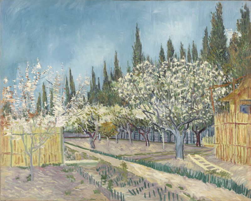 KM 108.685 Orchard bordered by cypresses, April 1888