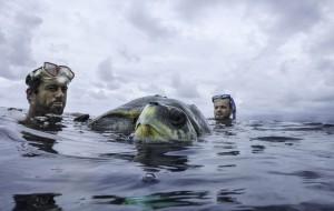 Sea Shepherd 0 Injured turtle rescue