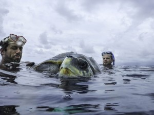 Sea Shepherd 0 Injured turtle rescue