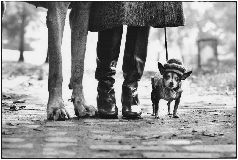 Elliott Erwitt, USA. New York. 1974 © Elliott Erwitt/MAGNUM PHOTOS