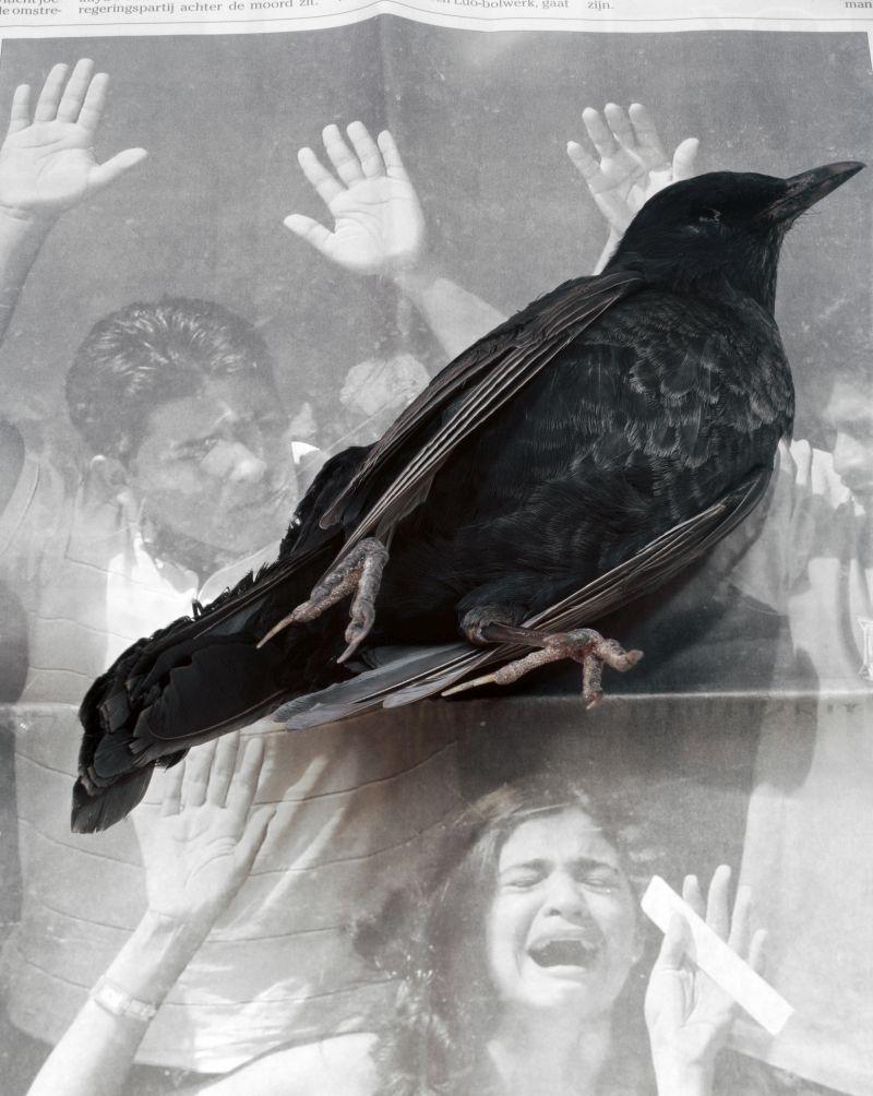 Dead Bird (2008) Archival pigment print 250 x 200 cm. - Photo Courtesy Geert Goiris