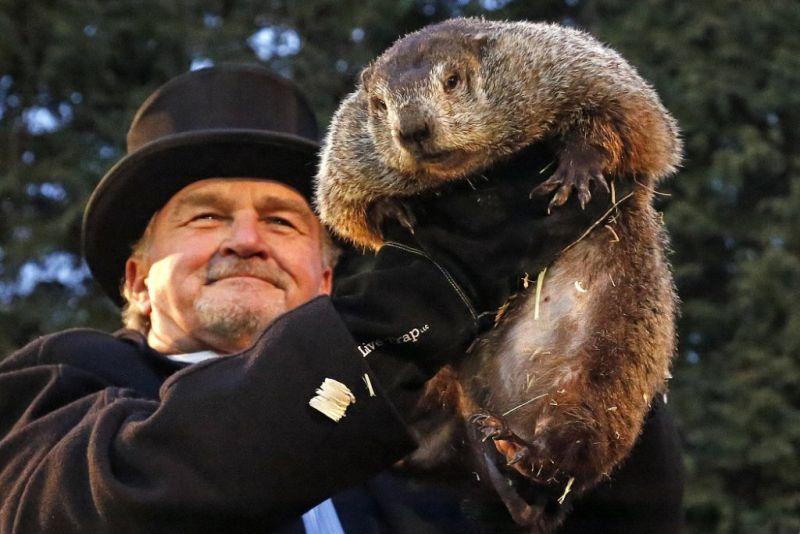 Giorno Marmotta 1