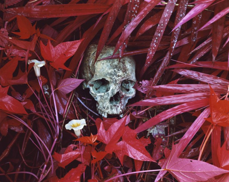 © Richard Mosse Of Lilies and Remains, eastern Democratic Republic of Congo, 2012 * DZ Bank Art Collection